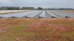 Familienbads in Hyllie Dachbegrünung und Solaranlage