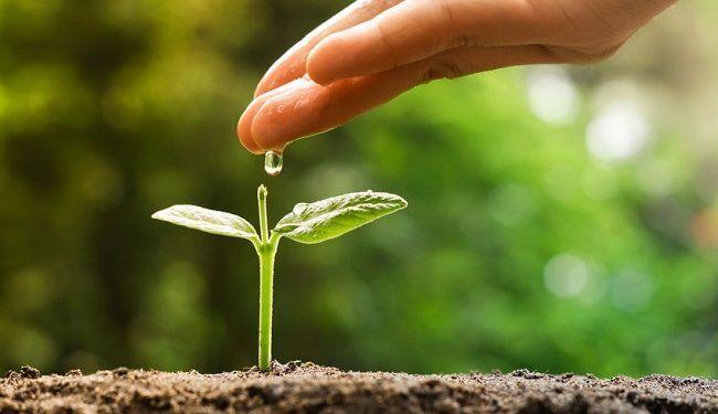 Ein Pflanzgarten für Wachstumstechnologien