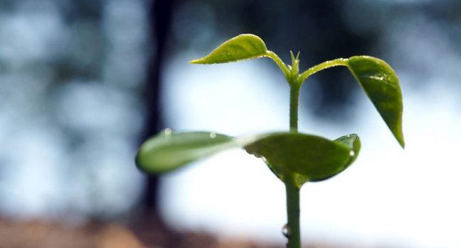 Grüne Geldanlagen und Investments Technewable