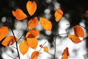 Dünne Zweige mit orange farbenen Blättern