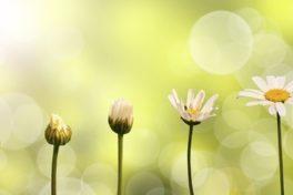 Berufswahl Nummer eins: Grüne Jobs mit Sinn und Zukunft