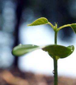 Initiative für grüne Geldanlagen und Investments gestartet