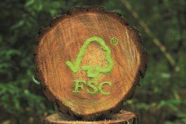 """FSC-Freitag – Zeit für eine """"Waldwende"""""""