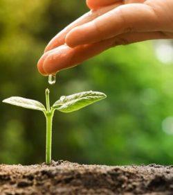 """Ein """"Pflanzgarten"""" für Wachstumstechnologien zur wechselseitigen Befruchtung von Unternehmen"""