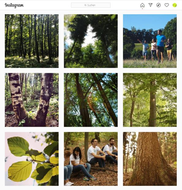 SAUBER ENERGIE Instagram Waldschutzprojekte