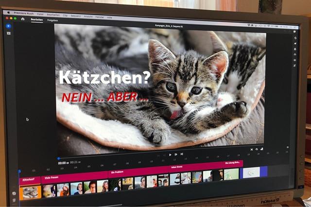 Katzenbild auf Bildschirm beschreibt Service Angebot Video