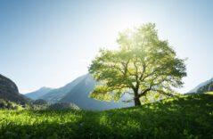 Grüner Aktienfonds bringt Nachhaltigkeitswende am Aktienmarkt ins Rollen