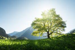 Grüner Aktienfonds bringt Nachhaltigkeitswende am Aktienmarkt ins Rollen – ANZEIGE