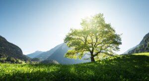 WIWIN just green impact Aktienfonds Kampagnenbild - grüne Wiese mit Baum vor blauem Himmel und Bergen