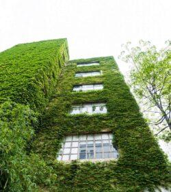 """Fassadenbegrünung – """"Gut für die Umwelt und den Wohlfühlfaktor"""""""